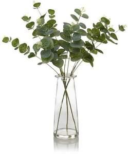 asda eucalyptus